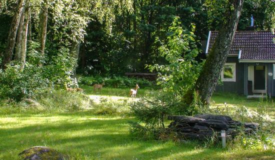 1_deer-in-garden