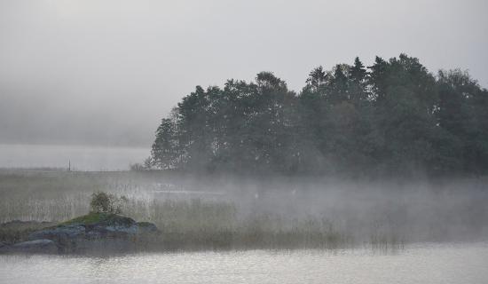 1_misty